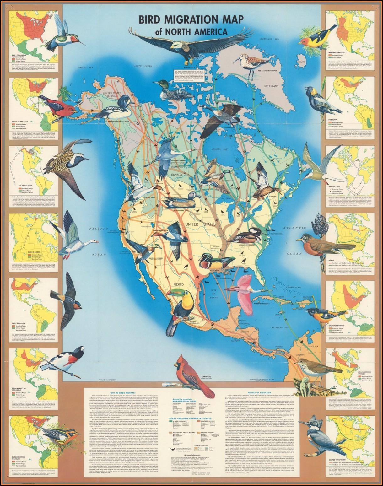 Bird Migration Map North America